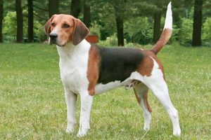 Housetraining Adult Dogs