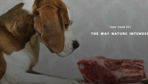 Where to buy organ meat for dogs