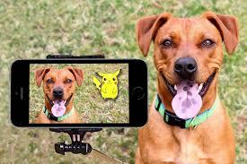 Best dog cameras